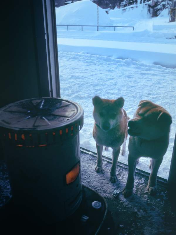 奥羽本線 峠の犬2  1990年1月 16bitAdobeRGB原版 take1b