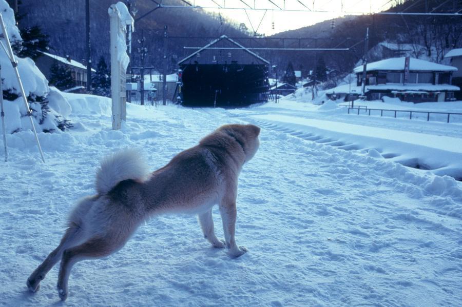 奥羽本線 峠5 1990年1月 16bitAdobeRGB原版 take1b