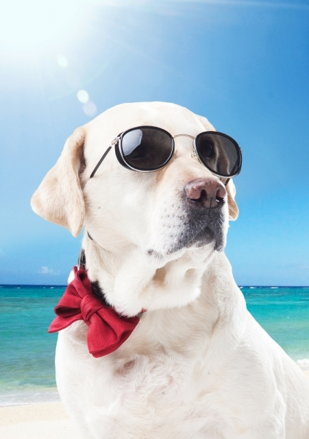 dow-dog-2018.jpg