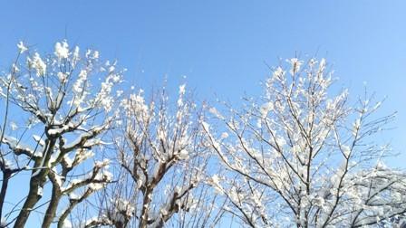 yukihana1.jpg