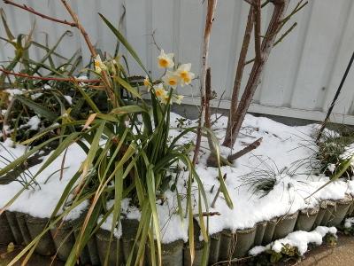 180212-雪の庭-5