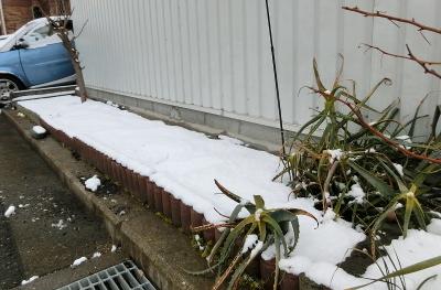 180212-雪の庭-7