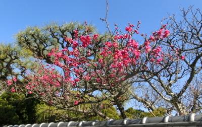 180208-散歩道の花-3
