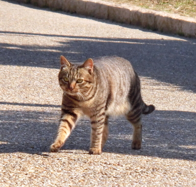 180222-野良猫さん-5
