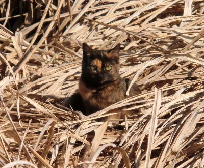 180222-野良猫さん-2