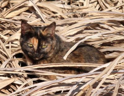 180222-野良猫さん-3