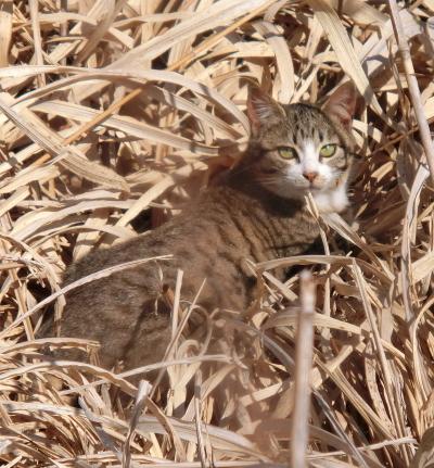180222-野良猫さん-4