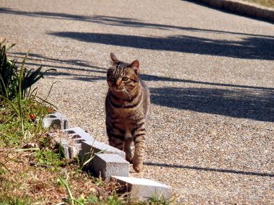 180222-野良猫さん-7