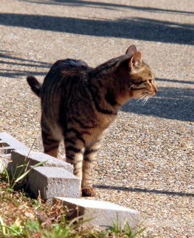 180222-野良猫さん-6