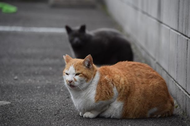猫20,21