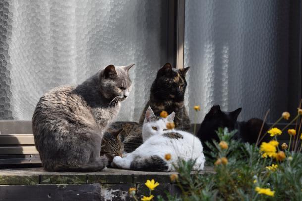猫17,18,19,20,21