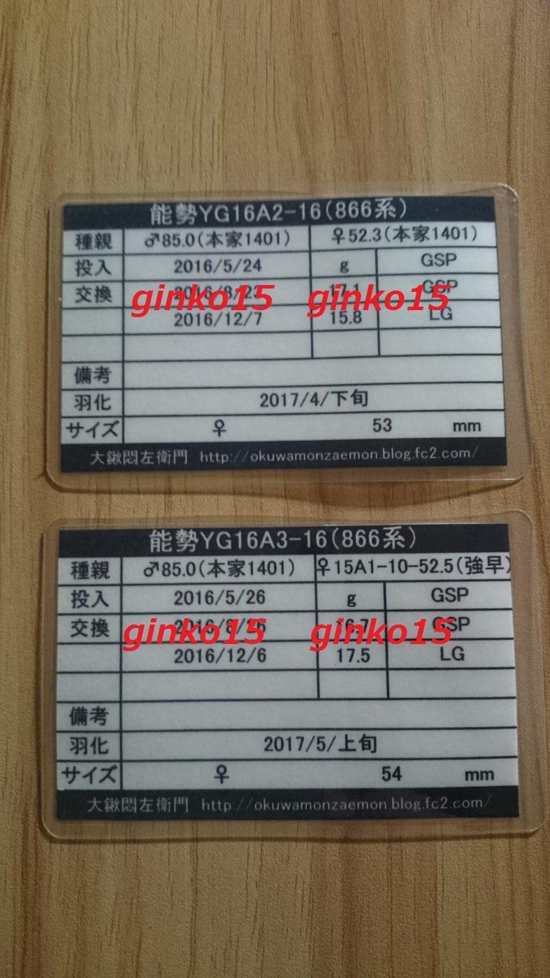 DSC_4741_convert_20171231014015.jpg