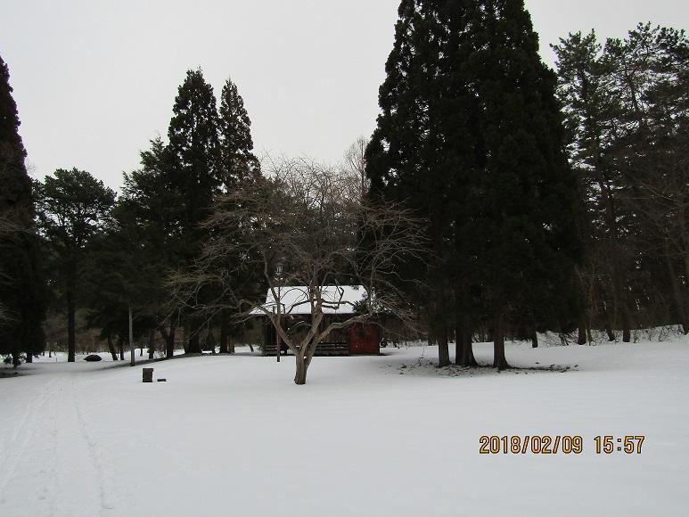 風の松葉冬1