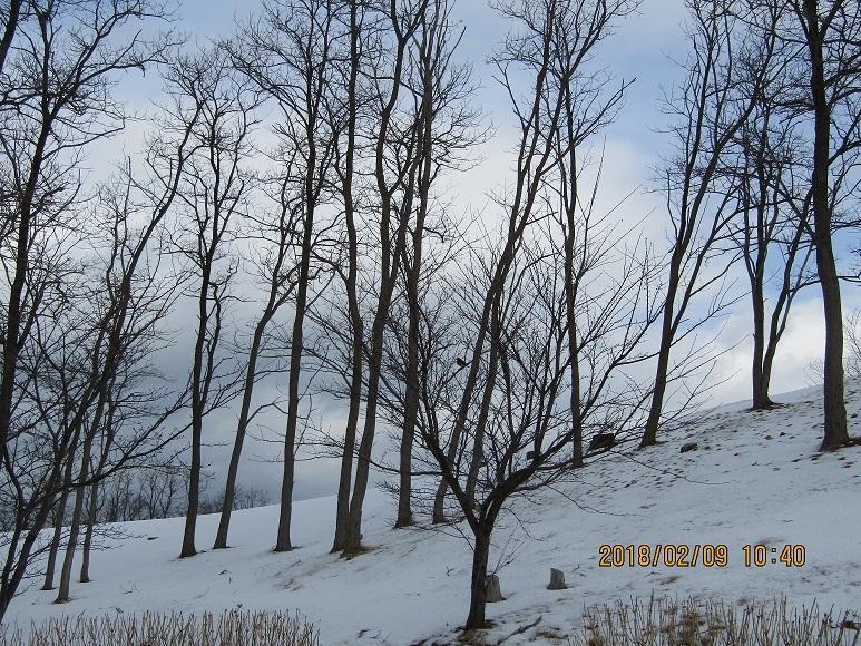 ぽんぽこ山30年冬1