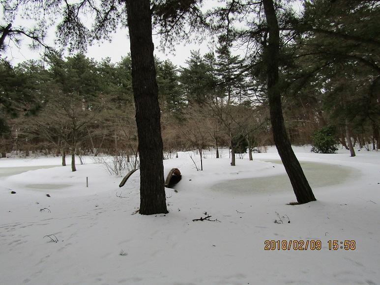 風の松原冬2