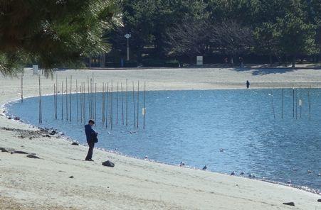 海苔の育成場