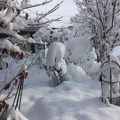 雪だらけ〜