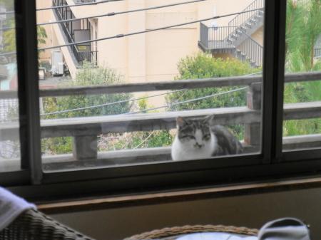 外の野良猫