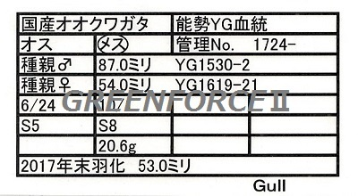 Gull172422530.jpg