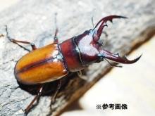 CIMG4630-4.jpg