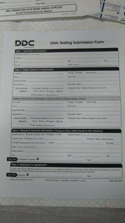 DDC申込み