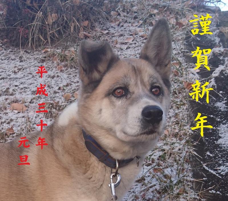 PIC_20171206_072709t ネンガ1