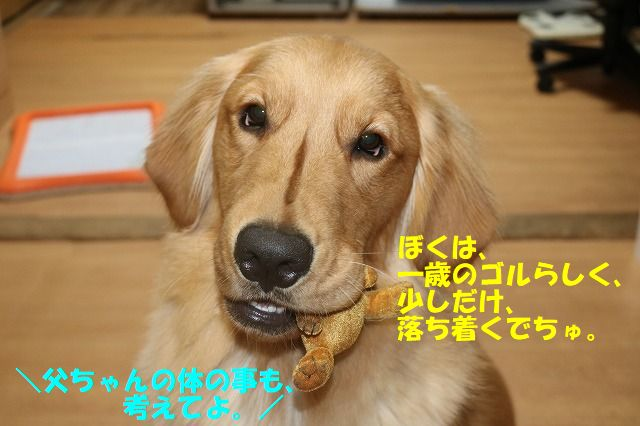 IMG_0996_20171231223305a81.jpg