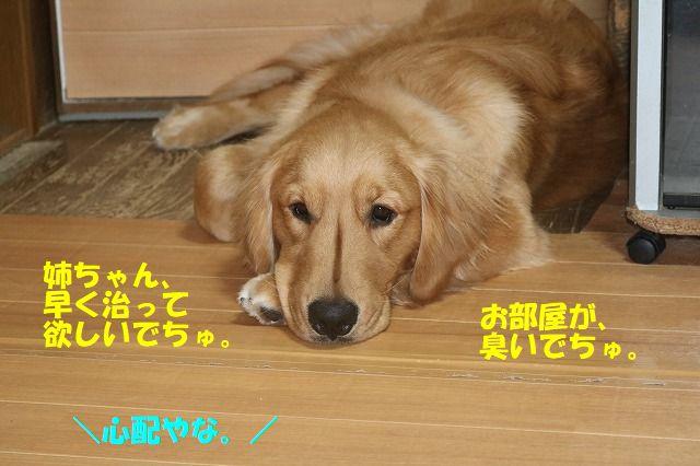 IMG_1125.jpg