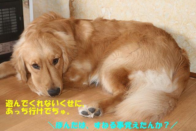 IMG_1374_20180123203015e53.jpg
