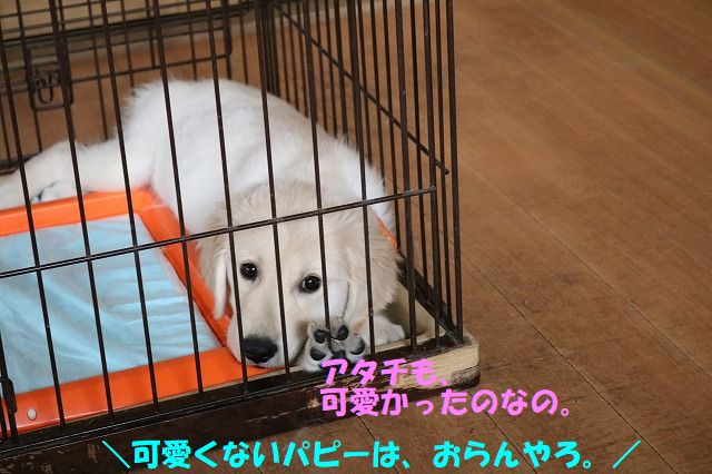 IMG_6189.jpg