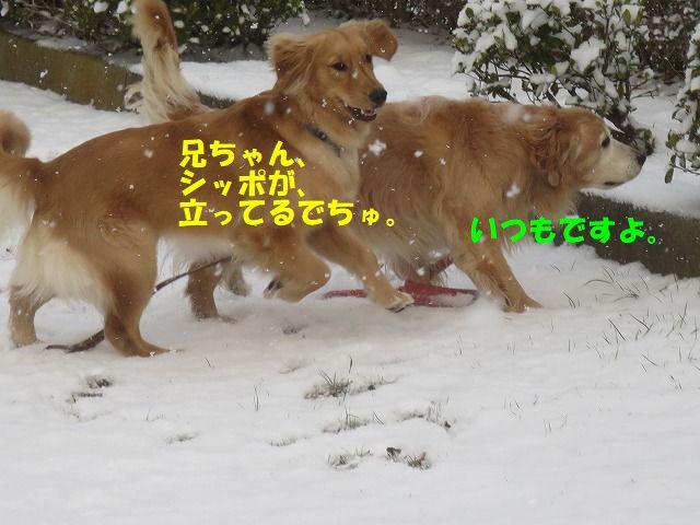 IMG_9094_20180127192322e6e.jpg