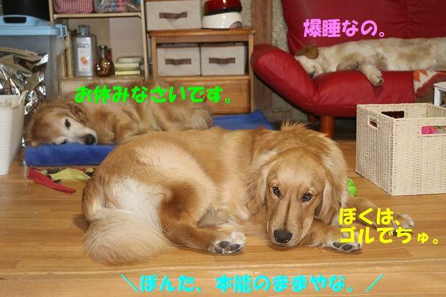 IMG_9241_20180207000946811.jpg