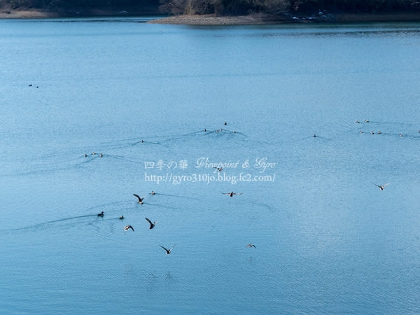 狭山湖 G