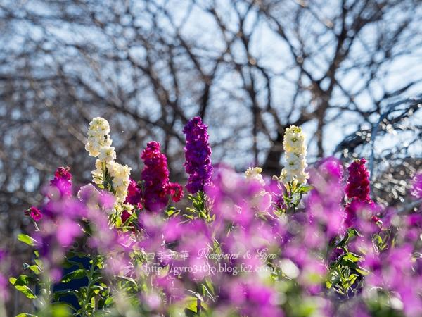 津久井湖城山公園花の苑地 B
