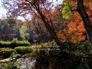 薬師池公園 E
