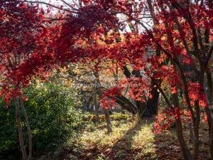 薬師池公園 I