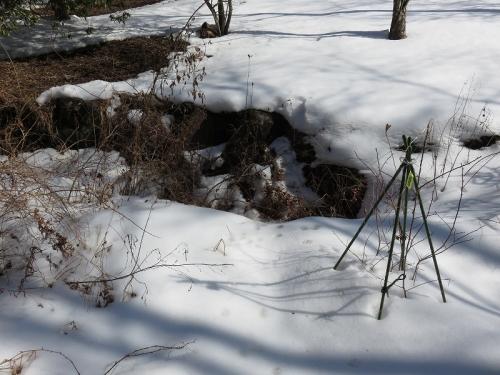 タヌキの巣穴 VC180209