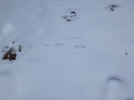 ウサギ足跡VC180223