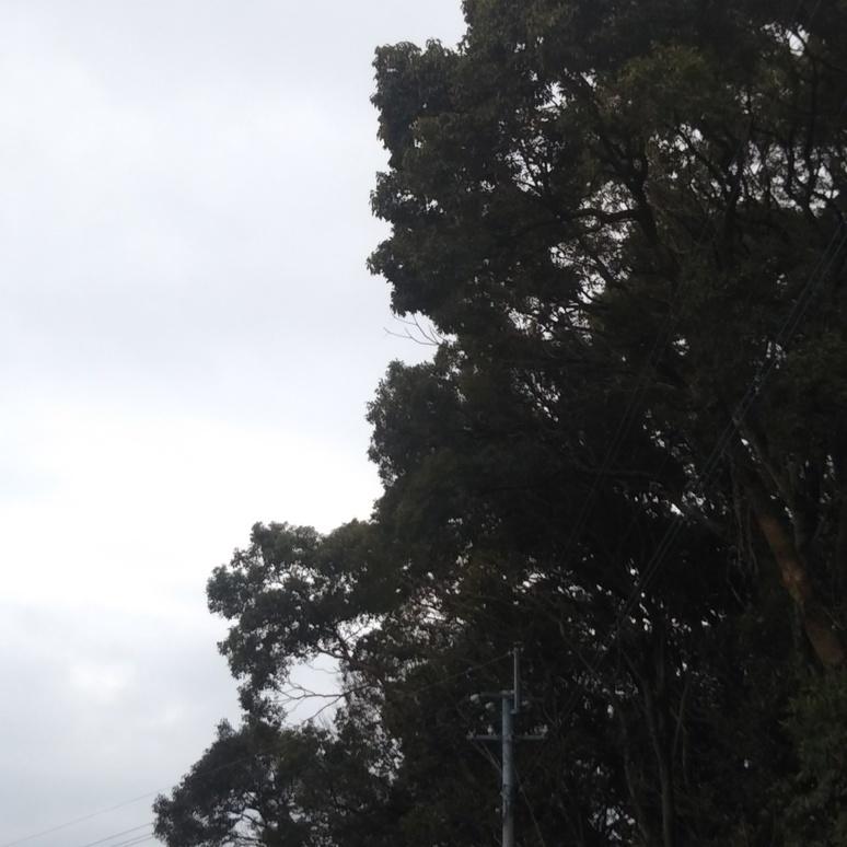 Tree 20180122