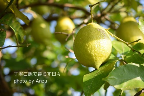 171129 レモン