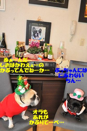 DSC_0328_20171225094536f71.jpg
