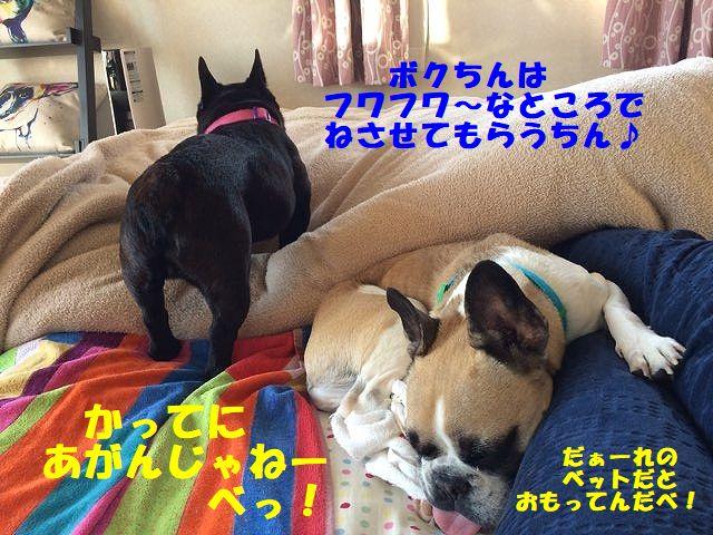 IMG_6528_2017112713433473c.jpg