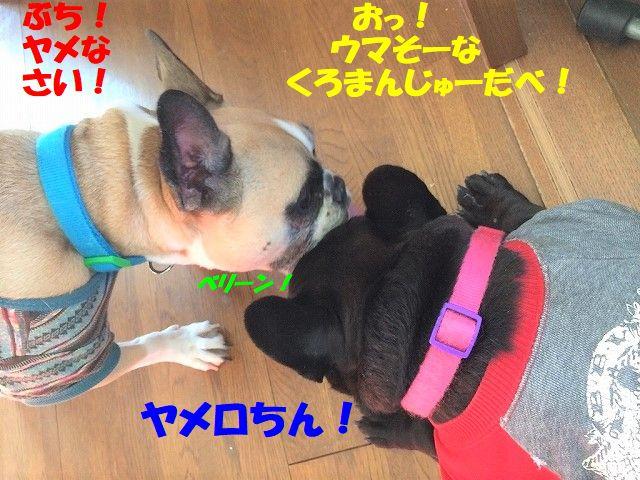 IMG_6585.jpg