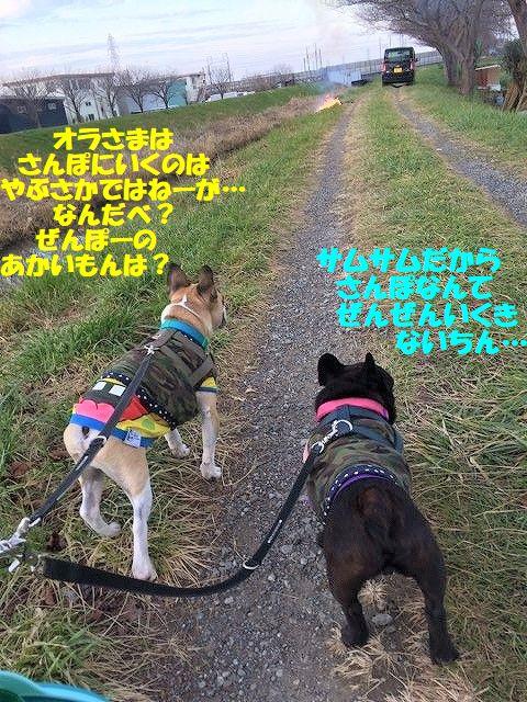 IMG_7072_20171219090936001.jpg