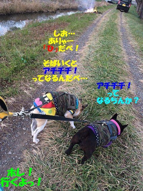 IMG_7073_2017121909093782c.jpg