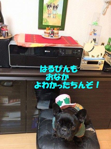 IMG_7210_2017122514463373f.jpg