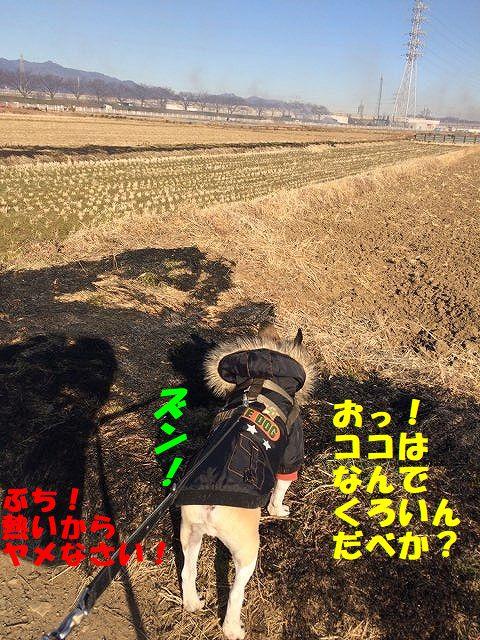 IMG_7866_20180115142511b0f.jpg