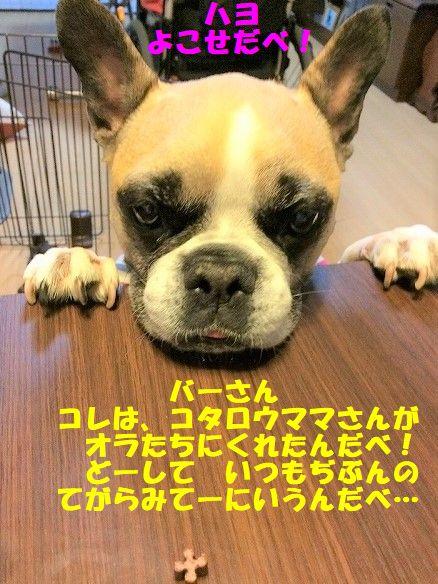 IMG_8078.jpg