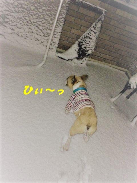 IMG_8212.jpg