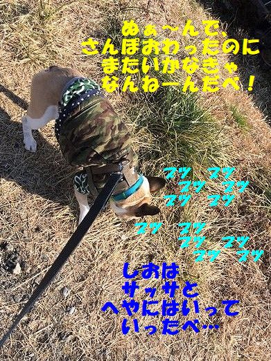 IMG_8550_2018020708311446e.jpg
